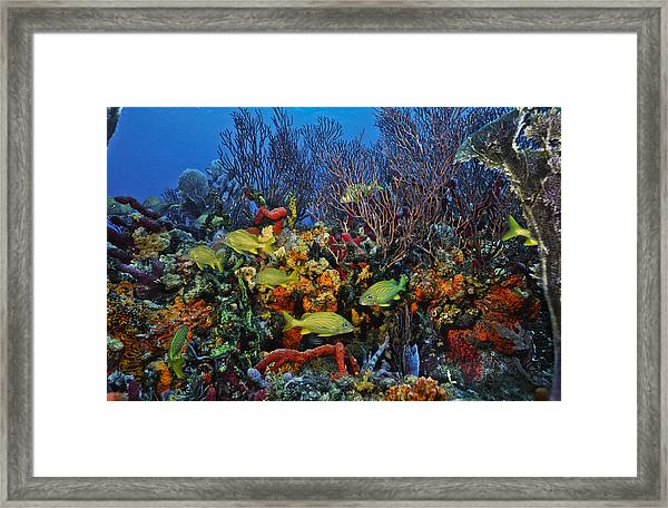 Lynns Reef On A Perfect Day Framed Print