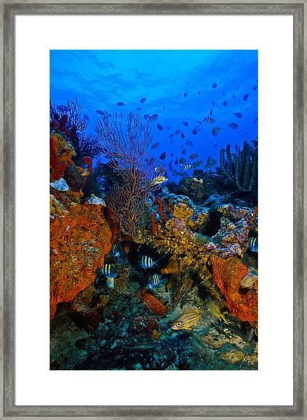Lynns Reef Framed Print