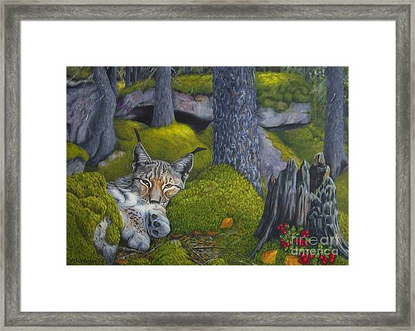 Lynx In The Sun Framed Print