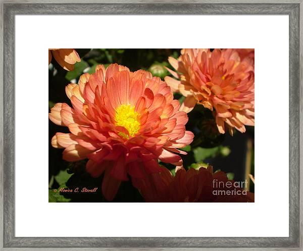 M Bright Orange Flowers Collection No. Bof1 Framed Print