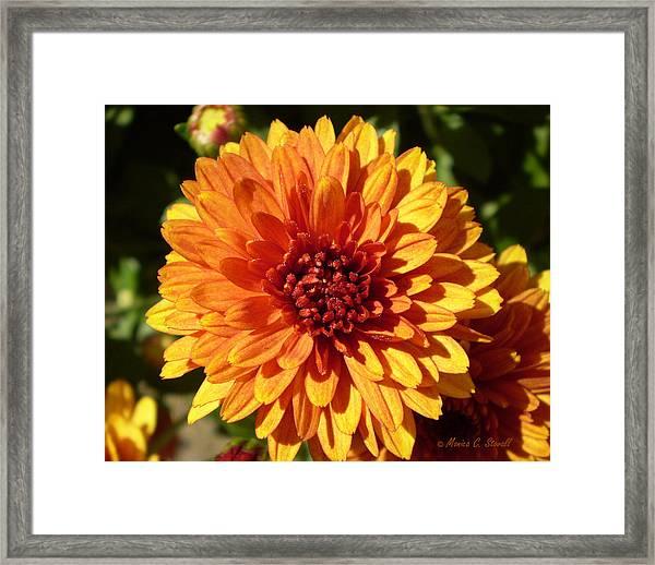 M Bright Orange Flowers Collection No. Bof3 Framed Print