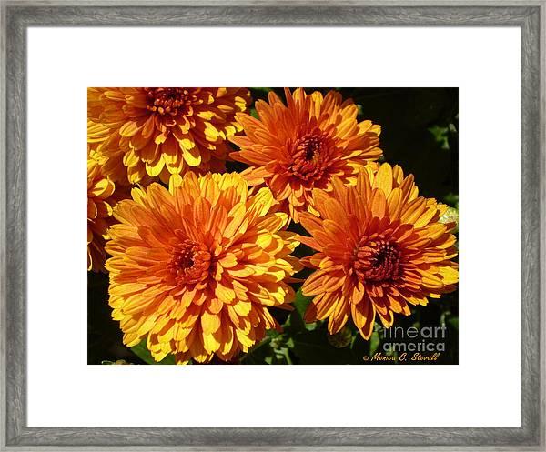 M Bright Orange Flowers Collection No. Bof4 Framed Print