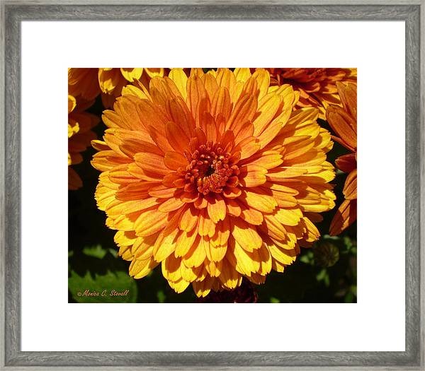M Bright Orange Flowers Collection No. Bof5 Framed Print