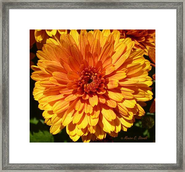 M Bright Orange Flowers Collection No. Bof7 Framed Print