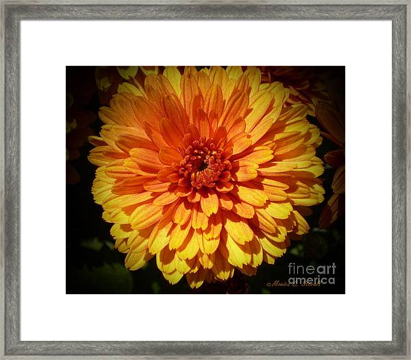 M Bright Orange Flowers Collection No. Bof8 Framed Print