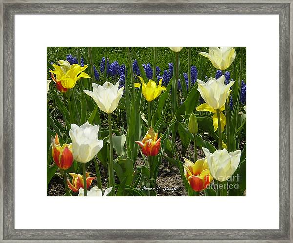 M Color Combination Flowers Collection No. Cc5 Framed Print