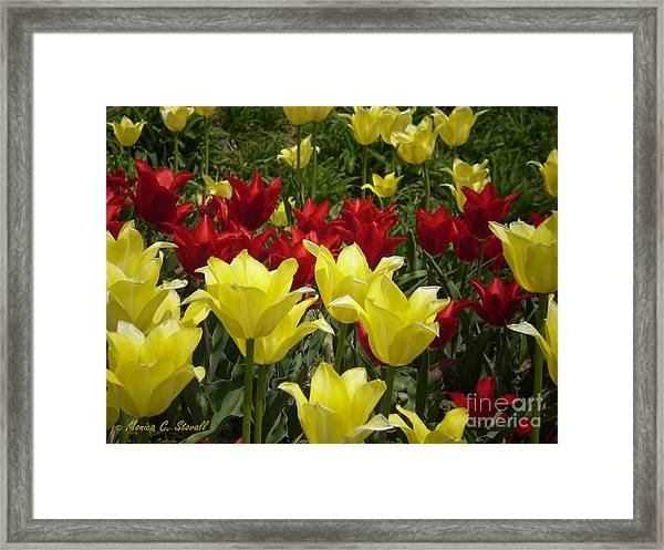 M Color Combination Flowers Collection No. Cc6 Framed Print