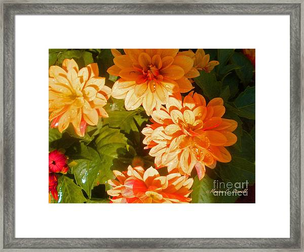 M Shades Orange Flowers Collection No. O3 Framed Print
