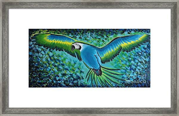 Macaw In Flight Framed Print