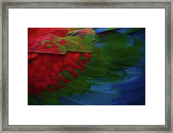 Macaw Plumage Detail Framed Print