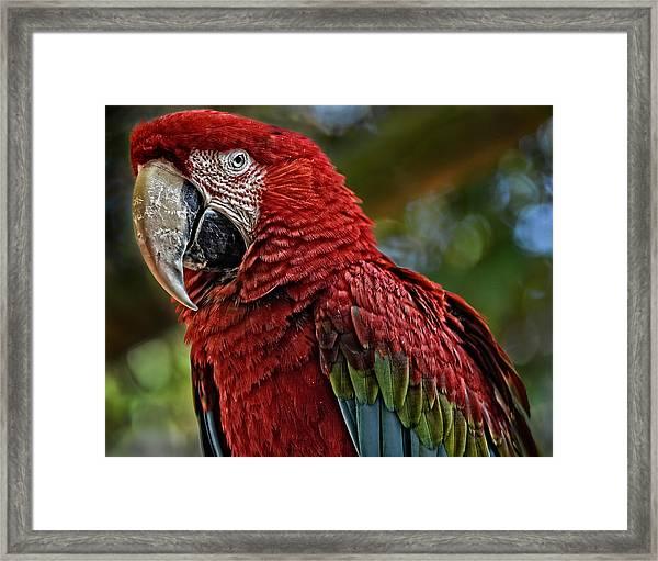 Macaw Portrait Framed Print