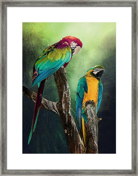 Macaws Siesta Time Framed Print