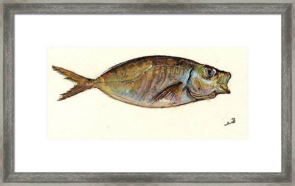 Mackerel Scad Framed Print