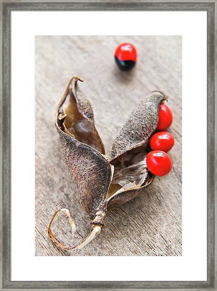 Macro Beads And Pods Framed Print