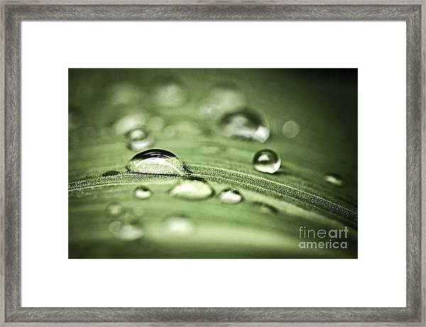 Macro Raindrops On Green Leaf Framed Print