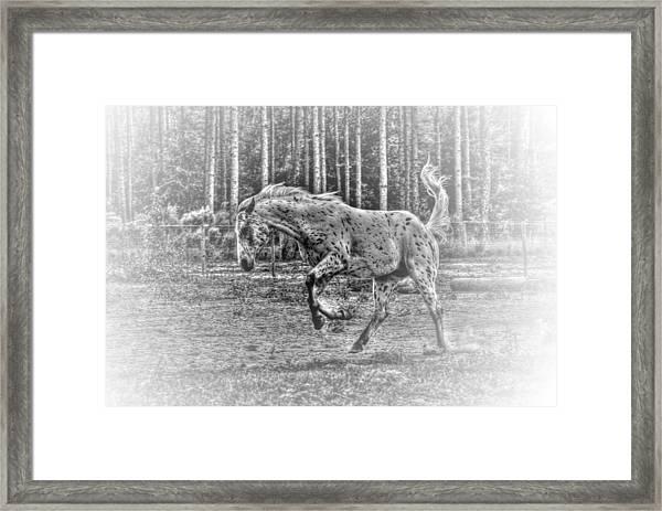 Mad Horse Framed Print