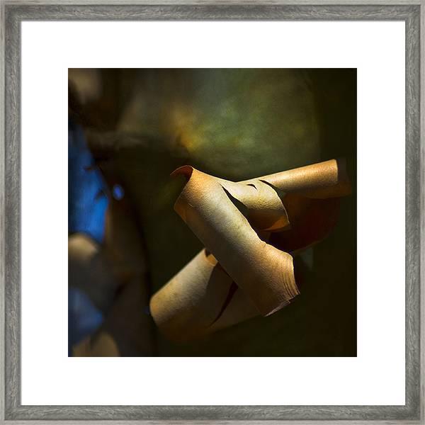 Madrona Tree Bark Framed Print