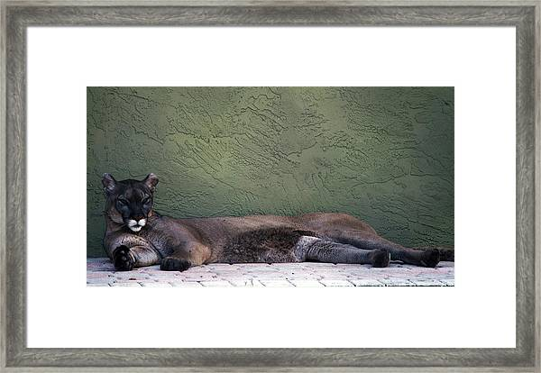 Magesty Framed Print