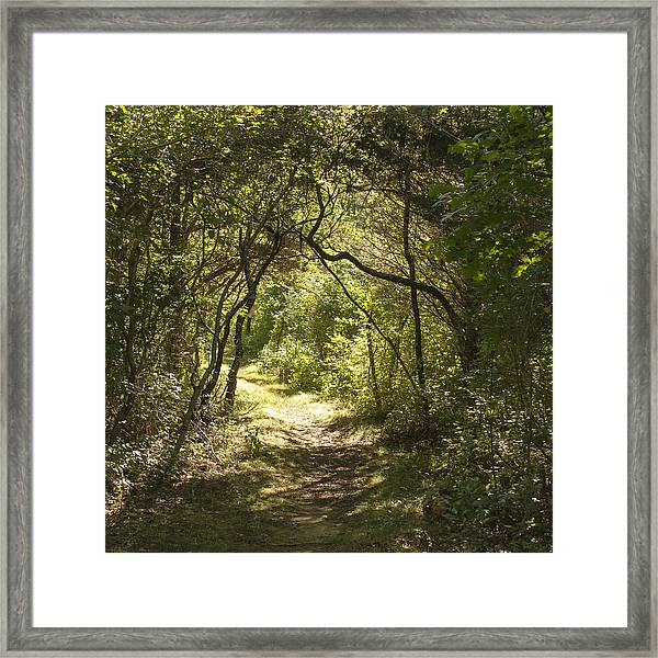 Magic Forest Welcome Framed Print