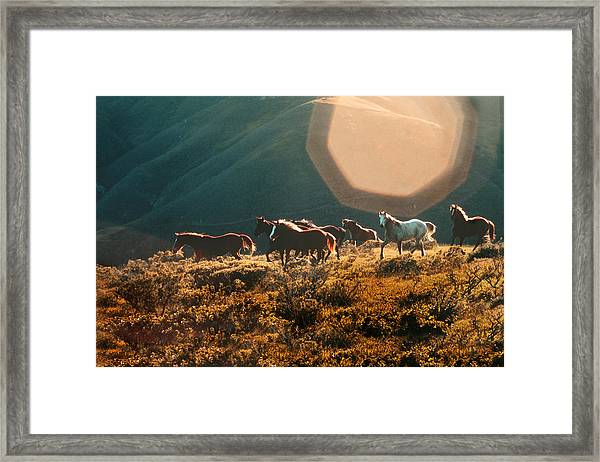 Magical Herd Framed Print