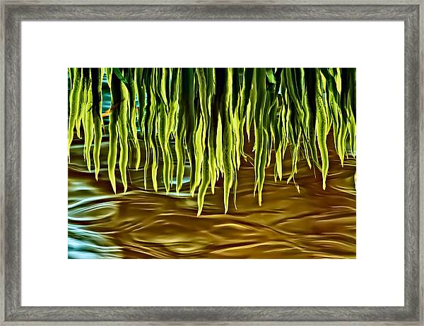 Magical Reflections Framed Print