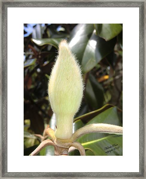 Magnolia - Essence Framed Print
