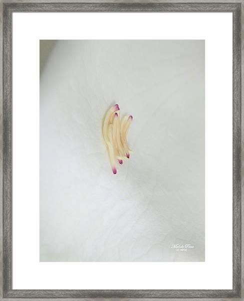 Magnolia Matches Framed Print
