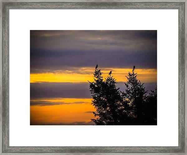 Magpies At Sunrise Framed Print