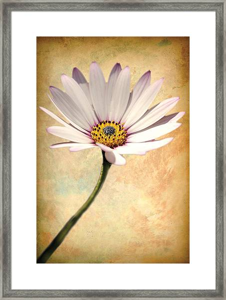 Maisy Daisy Framed Print