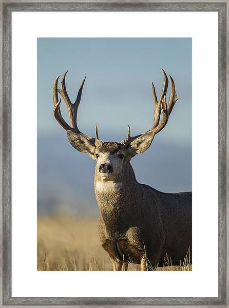 Majestic Buck Framed Print