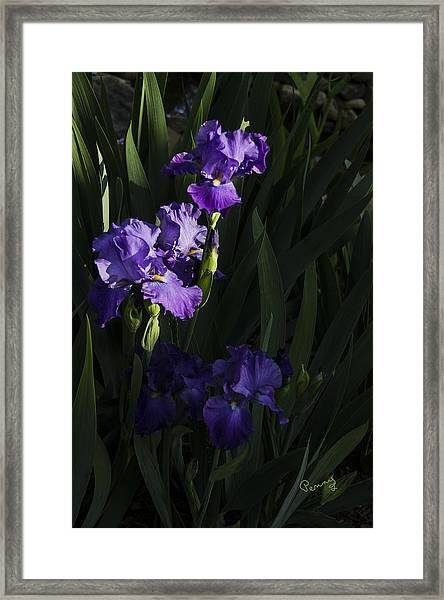 Majestic Spotlight Framed Print