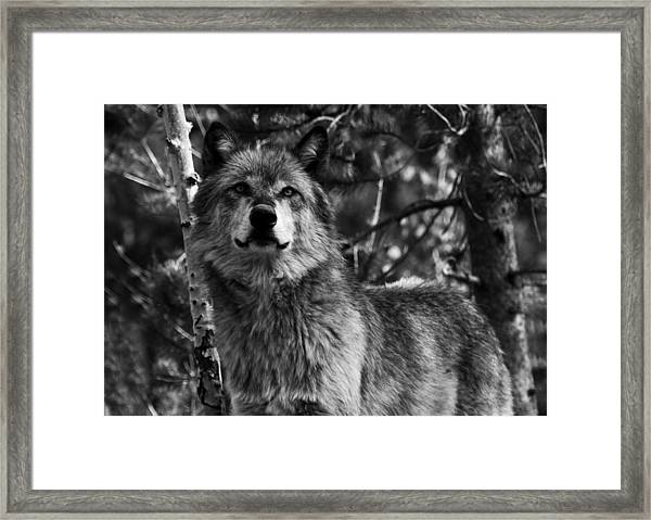 Majesty Framed Print