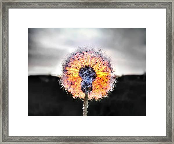 Make A Wish  Framed Print