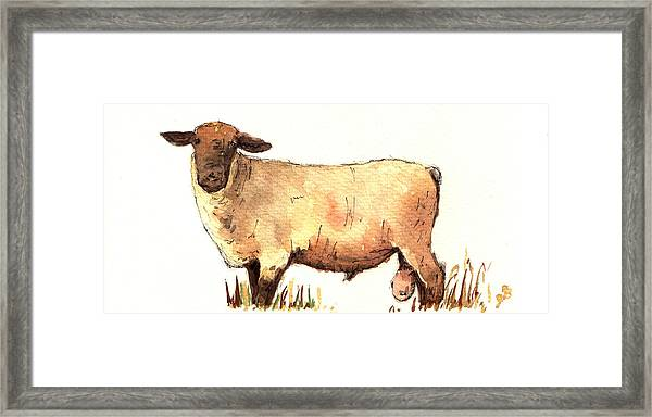 Male Sheep Black Framed Print