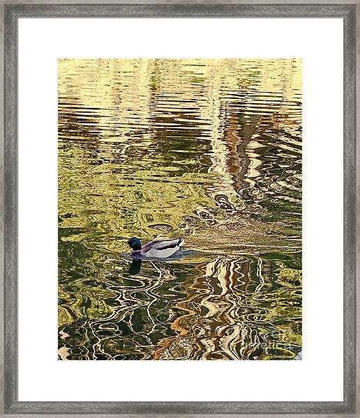 Mallard Painting Framed Print