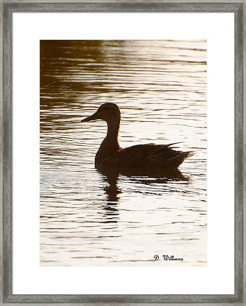 Mallard Silhouette Framed Print
