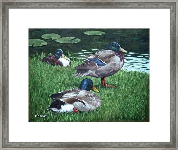 Mallards On River Bank Framed Print