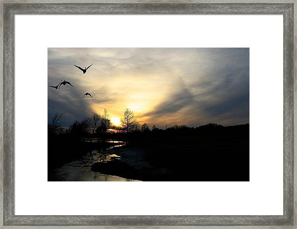 Mallards Silhouette At Sunset Framed Print