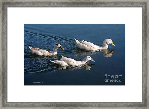 Mama Duck Leads The Way Framed Print