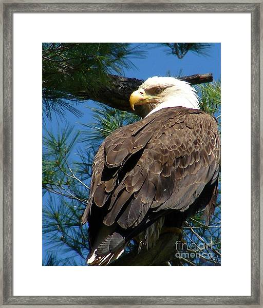 Mama Eagle Watching Framed Print