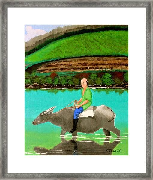 Man Riding A Carabao Framed Print