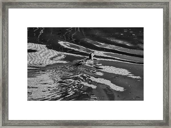 Mandarin Duck Bw - Leif Sohlman Framed Print