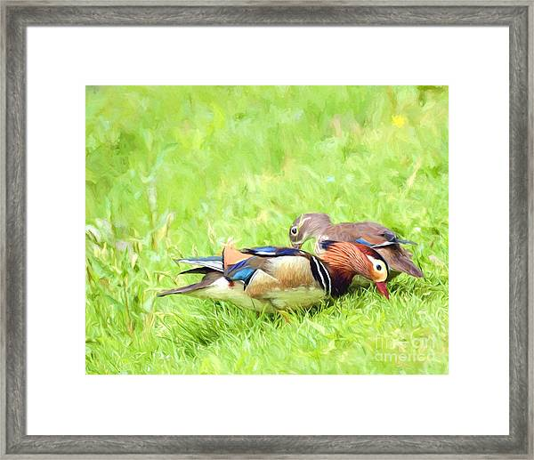 Mandarin Duck Couple Framed Print