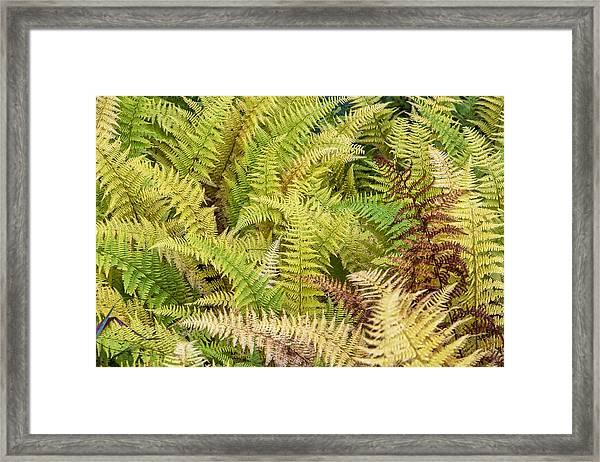 Mane Fern Framed Print