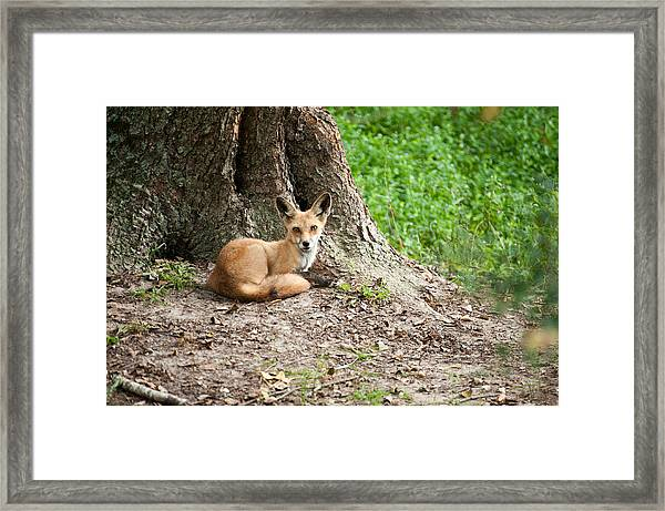 Maned Wolf Framed Print