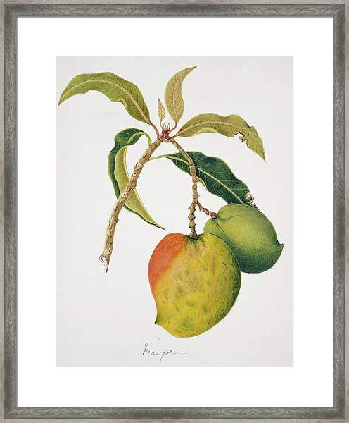 Mango Fruits Framed Print