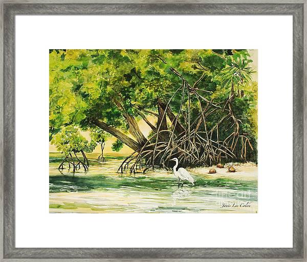 Mangrove Morning Framed Print