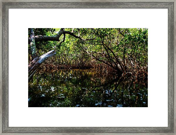 Mangrove Waters Framed Print