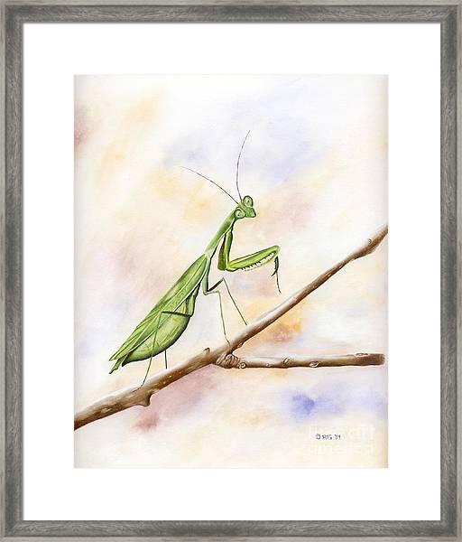 Mantis Framed Print
