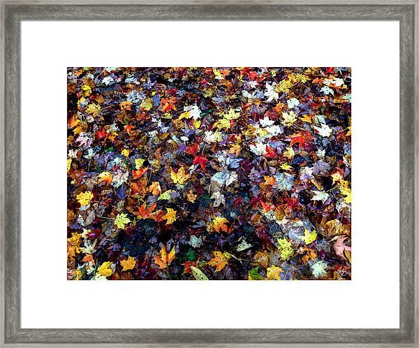 Maple Chaos Framed Print